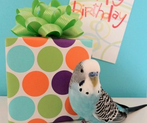 australian, bird, and birthday image