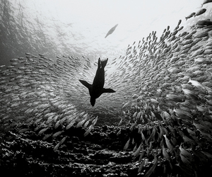 black and white, fish, and nature image