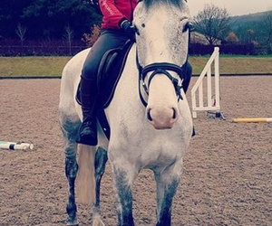 equestrian, ride, and grey image