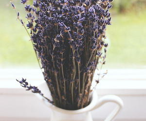 bouquet, flower, and lavender image