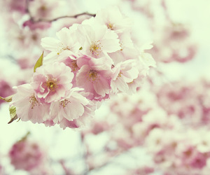 bloom, flowers, and spring image
