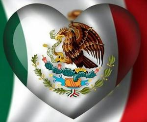 bandera, viva mexico, and méxico image