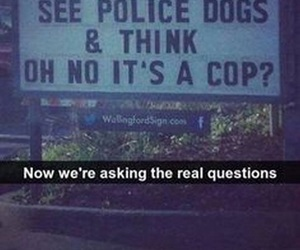 dogs, funny, and cops image