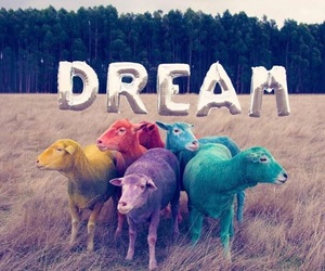Dream and sheep image