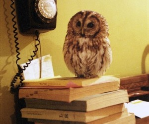 aesthetic, books, and fluffy image