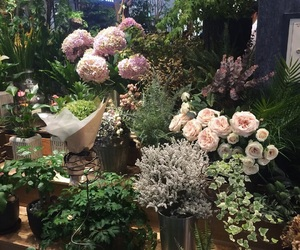 flowers, plants, and garden image