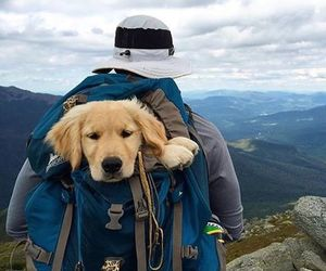 dog, puppy, and mountains image