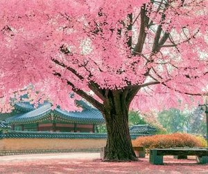 beautiful, cherry, and korea image