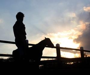 alternative, man, and horse image