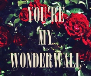 wonderwall, oasis, and rose image
