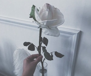flower, roes, and roses image