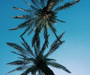 blue, palms, and summer image