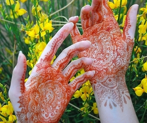 hands, field, and flowers image