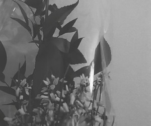 black, roses, and white image