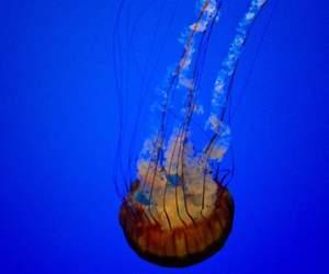 jellyfish, underwater, and nature image