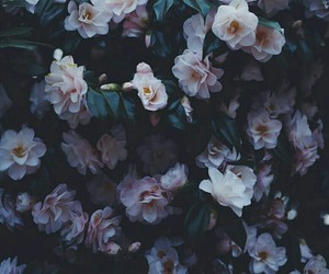 flowers, wallpaper, and grunge image