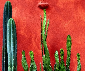 cactus, art, and aesthetic image
