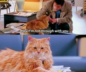 cat, castiel, and funny image