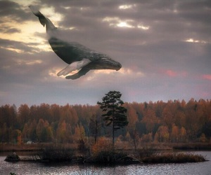 whale, forest, and sky image
