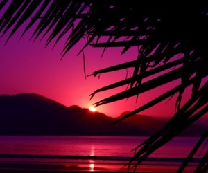 bright, magenta, and palm trees image