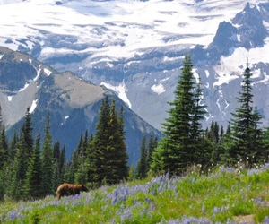animals, flowers, and mountain image