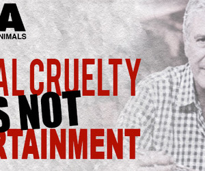 help, petition, and stop cruelty image