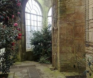 camellia, college, and country image