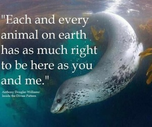 animal, quote, and Right image