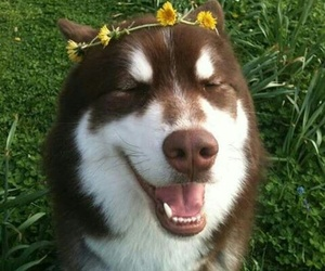 dog, flowers, and tumblr image