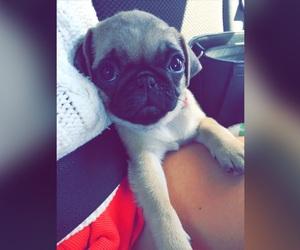 baby, dog, and pug image