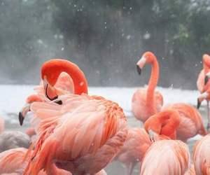 flamingo, animal, and pink image