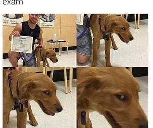funny, dog, and exam image
