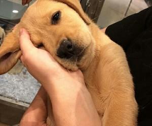 dog, Dream, and life image