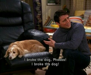 friends, Joey, and dog image