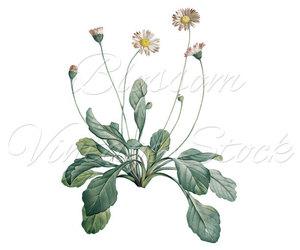 botanical, illustration, and decor image