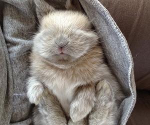 cute, rabbit, and animal image