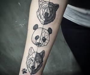 animal, bear, and spirit image