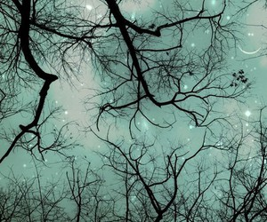 night, branches, and etsy image