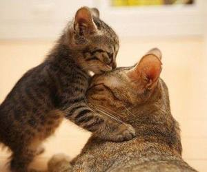 animals, cat, and kiss image