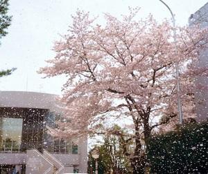 sakura, pink, and japan image