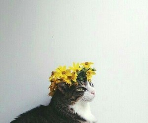 aesthetic, flower, and crown image