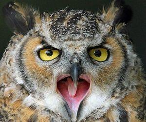 animal, closeup, and nature image