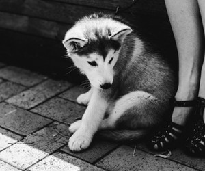 adorable, puppy, and cute image