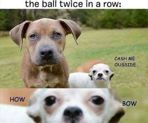 funny, dog, and meme image