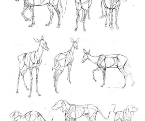 how to draw, horse drawing, and deer drawing image