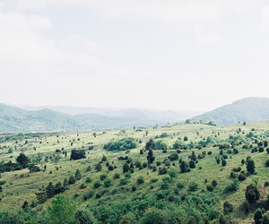 nature, landscape, and trees image