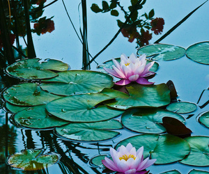 water, flowers, and nature image