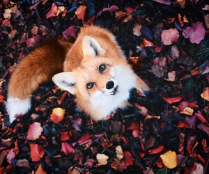 fox, animal, and autumn image