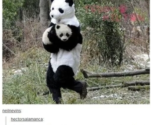 funny, panda, and lol image