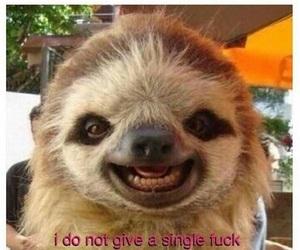 memes, texts, and sloth image